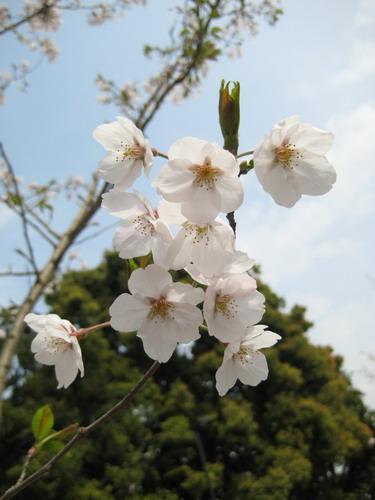 20090331 japan40.jpg