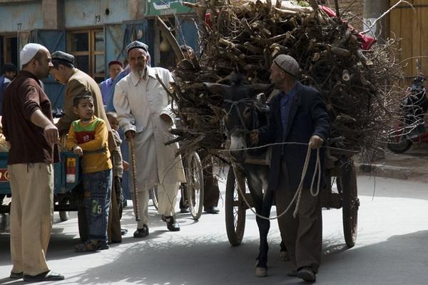 拉干柴的驢車