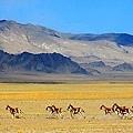 雷電谷的野驢.jpg