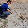 726扎什倫布寺狐狸和貓6.JPG