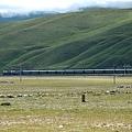 730青藏鐵路上的火車.JPG