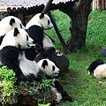 801熊貓基地1.jpg