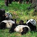 801熊貓基地2.jpg
