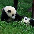 801熊貓基地4.jpg