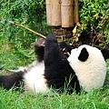 801熊貓基地5.jpg