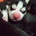 小恩很喜好睡覺