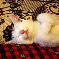 咪咪睡覺的樣子