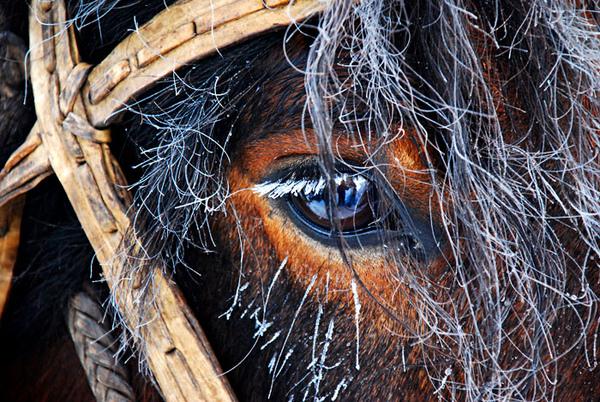 结霜的马.jpg