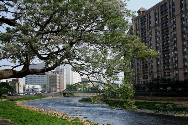 南崁溪旁的不知名的樹