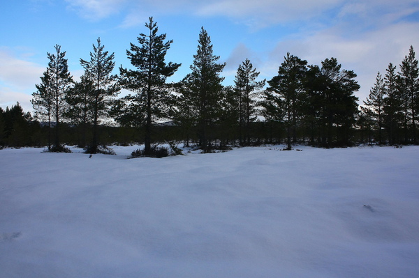 雪真的很多又很厚