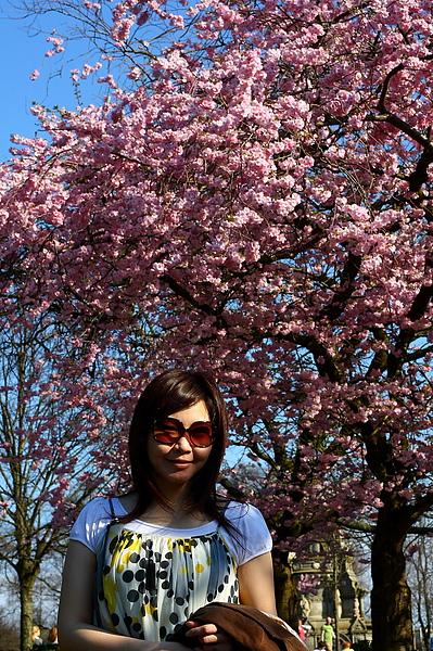Kelvingrove Park裡的櫻花-3