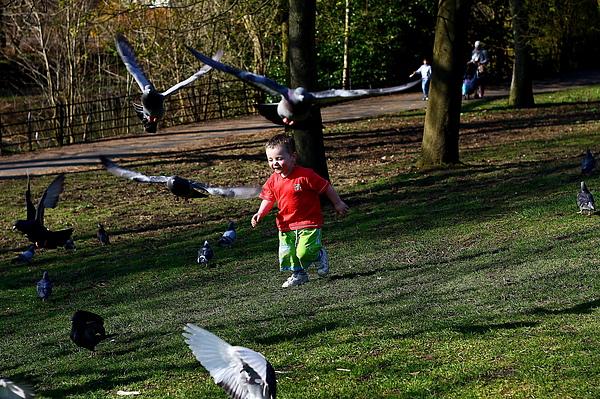 小朋友追趕鴿子