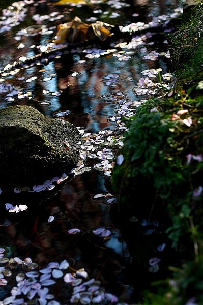 水面上的落花