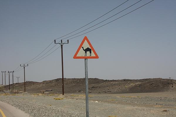小心駱駝過馬路