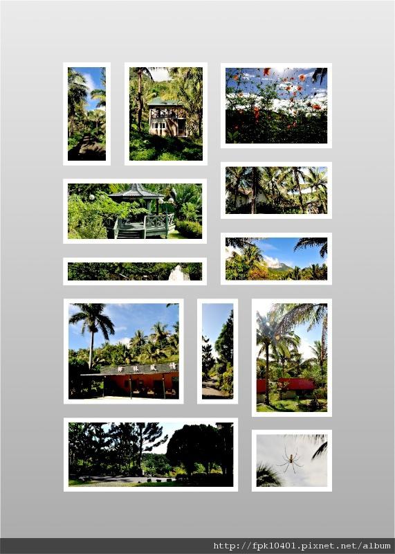 椰林2.jpg