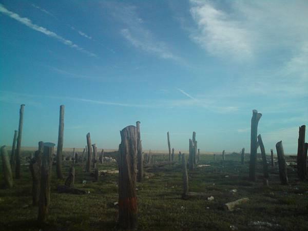 彰化福寶濕地
