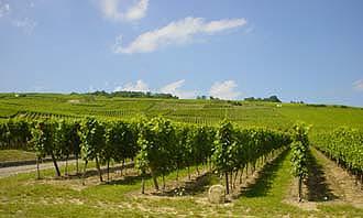 酒鄉之路上一望無盡的葡萄園