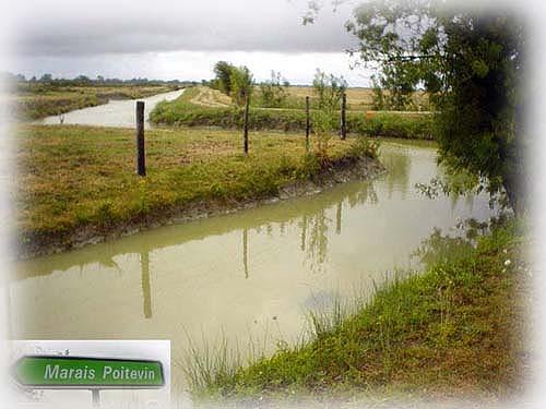 寧靜的綠色沼澤地帶~Le Marais Poitevin