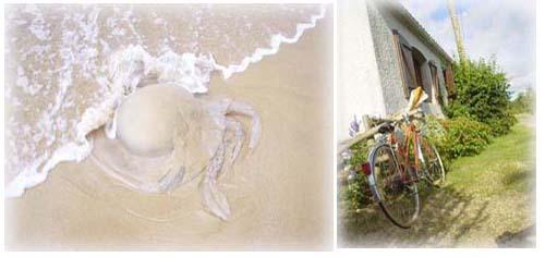 白色大水母與腳踏