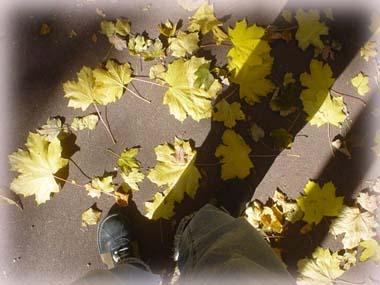 腳底下的秋桐