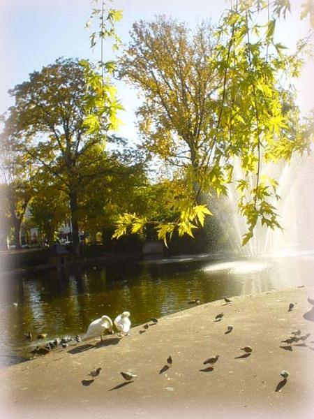 Le Coq公園,天鵝湖旁的絕美秋色