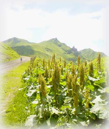 美麗青青草原、山脊自然步道 ...