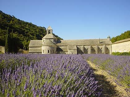 Senanque修道院前的薰衣草