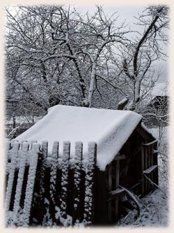 懷念雪...