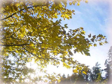 奧文尼山區裡的秋葉,很絕美哩!!!
