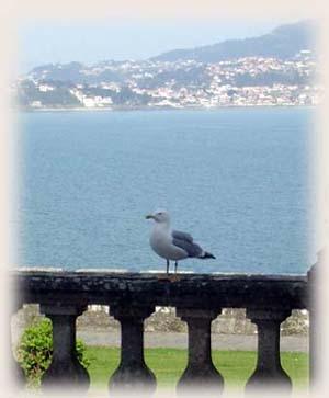Galicia 海岸邊,Baiona古堡海鳥