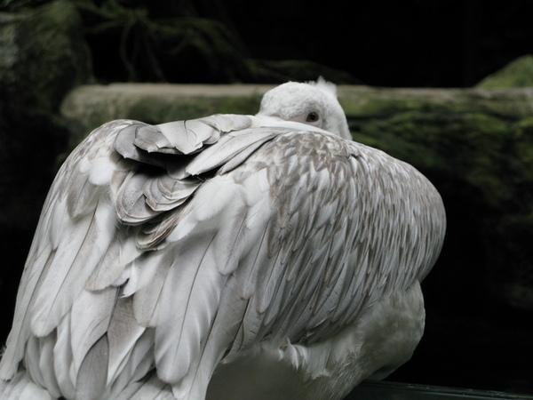 栩栩如生的大鳥