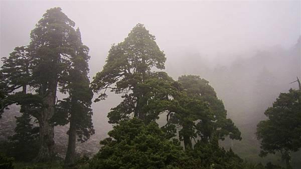 雪山西陵線 079 (2).jpg