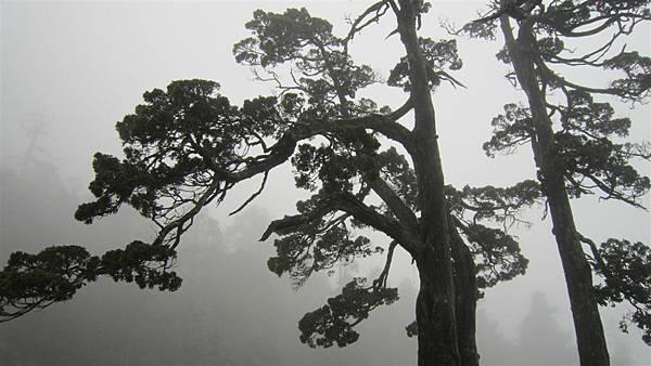 雪山西陵線 080 (2).jpg