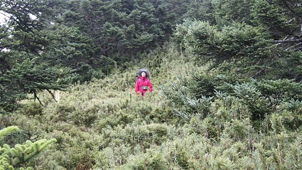 雪山西陵線 135 (2).jpg