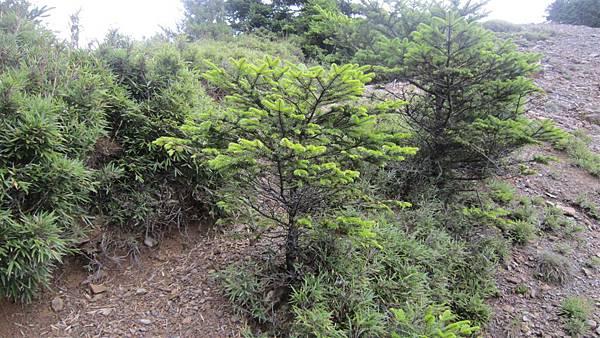 雪山西陵線 136 (2).jpg