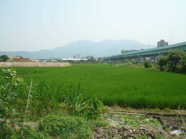 台北的田野