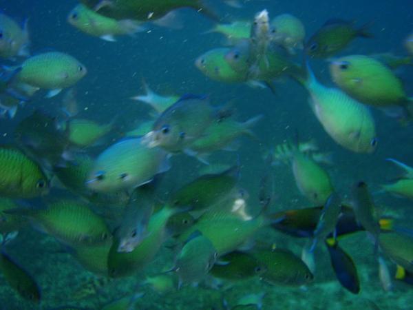 魚們.JPG