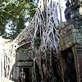 164塔普倫寺_傳說中的古墓場景.jpg