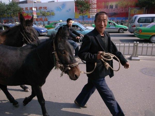008當街溜驢.jpg