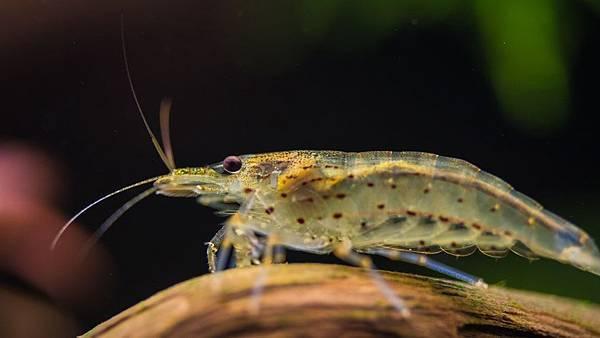 用人工智慧可以輕鬆養蝦蝦,還可以提高產量?!到底怎麼辦到的?