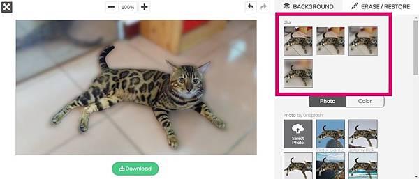 AI去背網站remove.bg幫孟加拉貓去背的實例-6.jpg