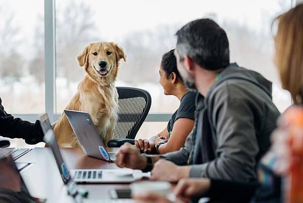 人工智慧機器人最佳導師竟是狗狗?!(上)
