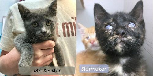 cat-sinister-n-starmaker-2.jpg