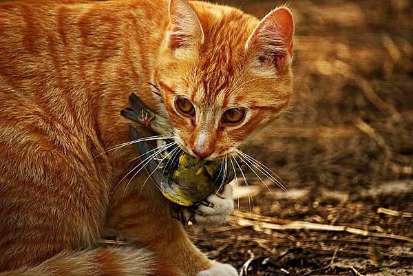 cat-with-prey-1.jpg