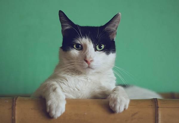 人工智慧貓屋庇護所,給浪浪一個溫暖的家!(上)