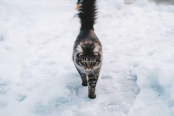 winter-cat-1.jpg