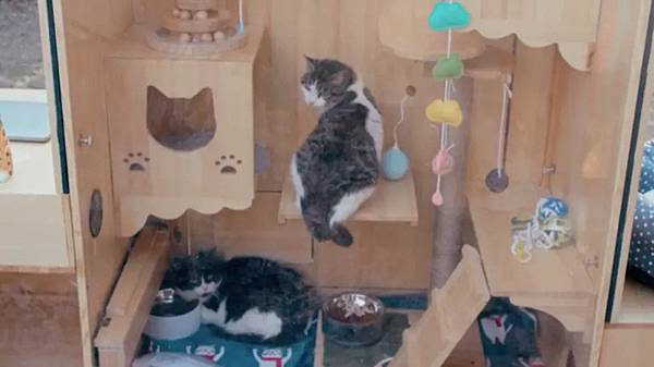 ai-cat-shelter-image-3.jpg
