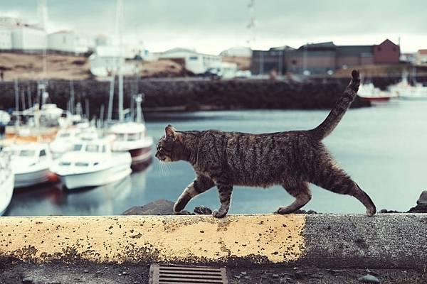 人工智慧貓屋庇護所,給浪浪一個溫暖的家!(下)