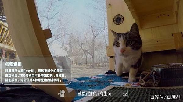 ai-ill-cats-detector-8.jpg