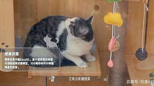 ai-fixed-cats-detector-9.jpg